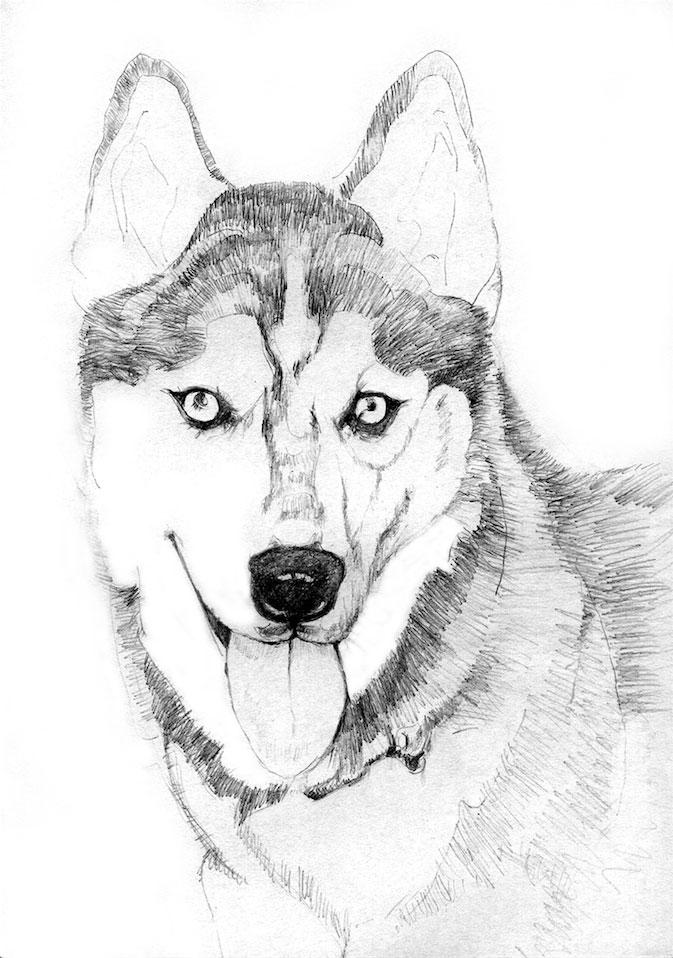 Faye's Dog